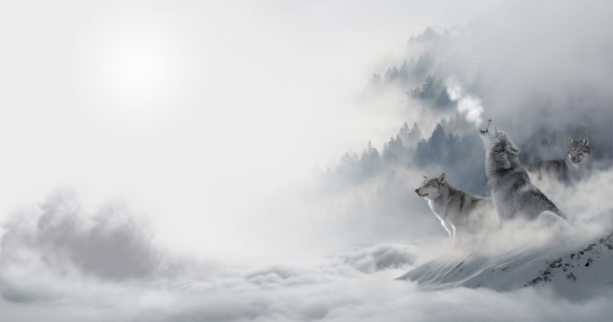 wolves magical fog